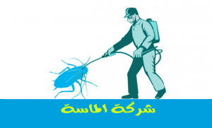 شركه مكافحة حشرات بجازان