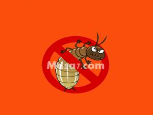 افضل شركة مكافحة النمل الابيض بمكة المكرمة