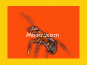شركات مكافحة النمل الابيض بمكة
